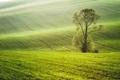 Картинка деревья, природа, поля, весна, зеленые