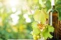 Картинка бокал, бутылка, солнечные лучи, вино, виноград