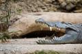 Картинка челюсти, хищник, зубы, крокодил, рептилия