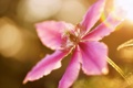 Картинка цветок, лето, макро, сиреневый, климатис