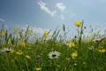 Картинка природа, трава, небо, фото, цветы