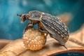 Картинка макро, жук, насекомое