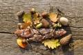 Картинка осень, листья, кора, шишка, желудь, веселые дни осени, cheerful autumn days