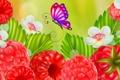 Картинка цветы, природа, ягоды, малина, коллаж, бабочка, открытка