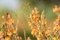 Картинка цветы, желтые, размытость, оранжевые, полевые