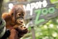 Картинка фон, обезьяна, зоопарк