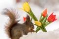 Картинка цветы, природа, белка