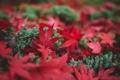 Картинка осень, трава, листья, макро