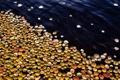 Картинка листья, вода, опавшие, осенние