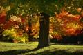 Картинка природа, осень, парк, дерево
