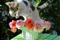 Картинка кошка, кот, прыжок, корзина, розы, © Elena Di Guardo