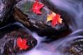 Картинка осень, листья, река, камни, цвет, поток, клен