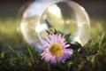 Картинка цветок, природа, фото, обои, ваза, травка, картинка