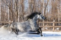 Картинка зима, снег, конь
