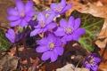 Картинка природа, лепестки, листиья