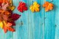 Картинка осень, листья, дерево, клён