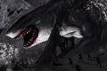 Картинка акула, art, SWAT, by TheRisingSoul, Shark Attack