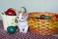 Картинка яйца, пасха, котёнок, крашенки