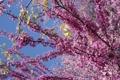 Картинка цветы, весна, сирень, голубое небо