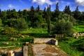 Картинка трава, деревья, камни, Греция, развалины, кусты, Acropolis