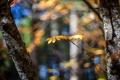 Картинка осень, макро, свет, деревья, природа, блики, стволы