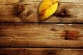 Картинка осень, листья, макро, фото, дерево, доски, листок