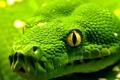 Картинка чешуя, глаза, snake, рептилия, eyes, змея, reptile
