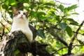 Картинка кот, листья, дерево, кошак
