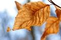 Картинка осень, листопад, осенние обои, жёлтый, листок, листья, фото