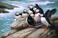 Картинка море, птицы, камни, арт, Puffins, тупики, Roger Tory Peterson