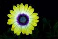 Картинка цветок, краски, фон, лепестки