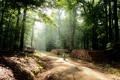 Картинка дорога, лес, деревья, природа, велосипед, фото, ребенок