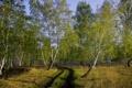 Картинка дорога, осень, лес, берёзы