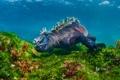Картинка ящерица, риф, Эквадор, Галапагосские острова, остров Фернандина, морская игуана