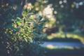 Картинка листья, растение, зеленые, боке