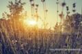 Картинка свет, природа, утро, травы