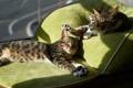 Картинка кот, солнце, коты, подушки, спят