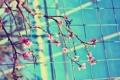 Картинка листья, цвета, цветы, ветки, природа, фото, яркие