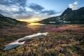 Картинка пейзаж, горы, поле, цветы