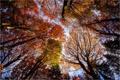 Картинка осень, листья, деревья, кроны