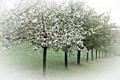 Картинка деревья, природа, весна, сад