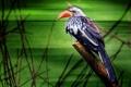 Картинка птица, ветка, клюв, хвост, тукан