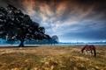 Картинка landscape, tree, morning, horse