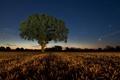 Картинка пейзаж, поле, ночь, дерево