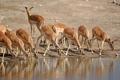 Картинка природа, Намибия, антилопы