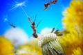 Картинка цветок, небо, одуванчик, семена, пух, муравей, парашют