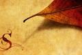 Картинка осень, настроение, надпись, текстура, месяц, сентябрь, опавшие листья