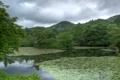 Картинка зелень, деревья, пруд, парк, Япония, Kinkaku, Kyoto Gardens