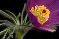 Картинка цветение, цветок, листья, макро