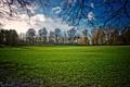 Картинка поле, небо, трава, солнце, деревья, пейзаж, природа